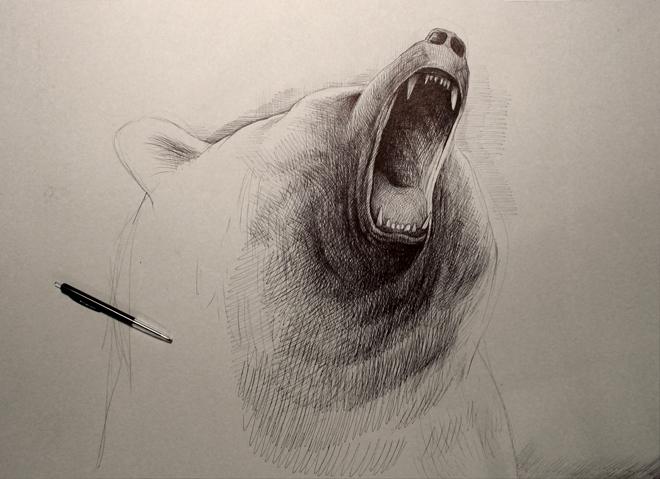 Sur-bjørn-011