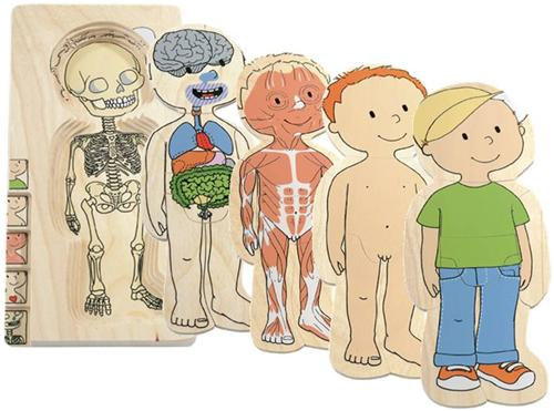anatomisk puslespil 229 legeakademiet