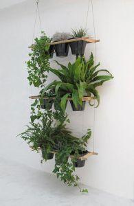 mallorylucille planter på væg